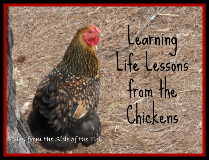 lessons from the chickens