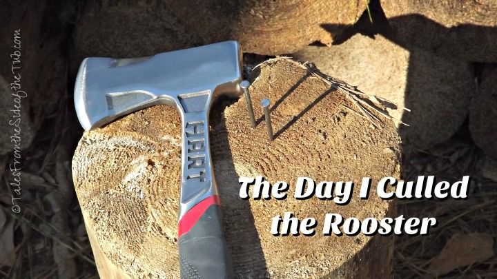 the-day-i-culled-the-rooster